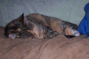 Our patched tabby cat Freya asleep on the futon