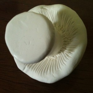 the underside of a white Sculpey mushroom showing the gills