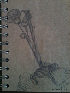 A sketch of some twigs with berries and some petals