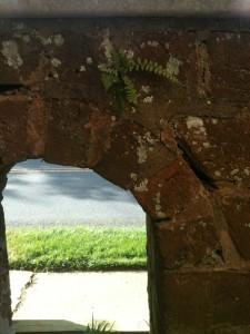 A fern growing in a brick wall