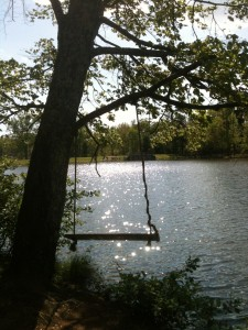 A swing on a tree by a lake
