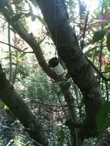 A film cannister hanging in a tree